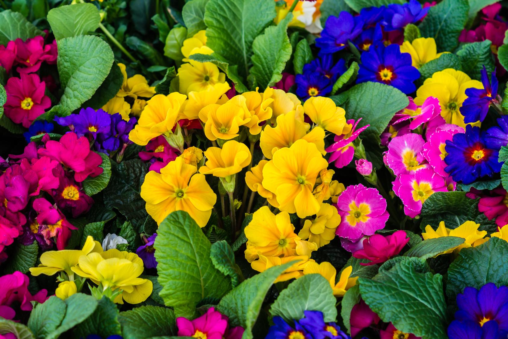 Quelles Fleurs Resistent A L Hiver