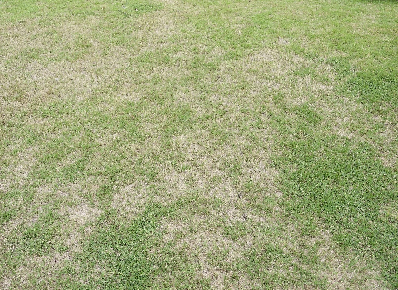 comment refaire une pelouse neuve apr s l 39 t. Black Bedroom Furniture Sets. Home Design Ideas