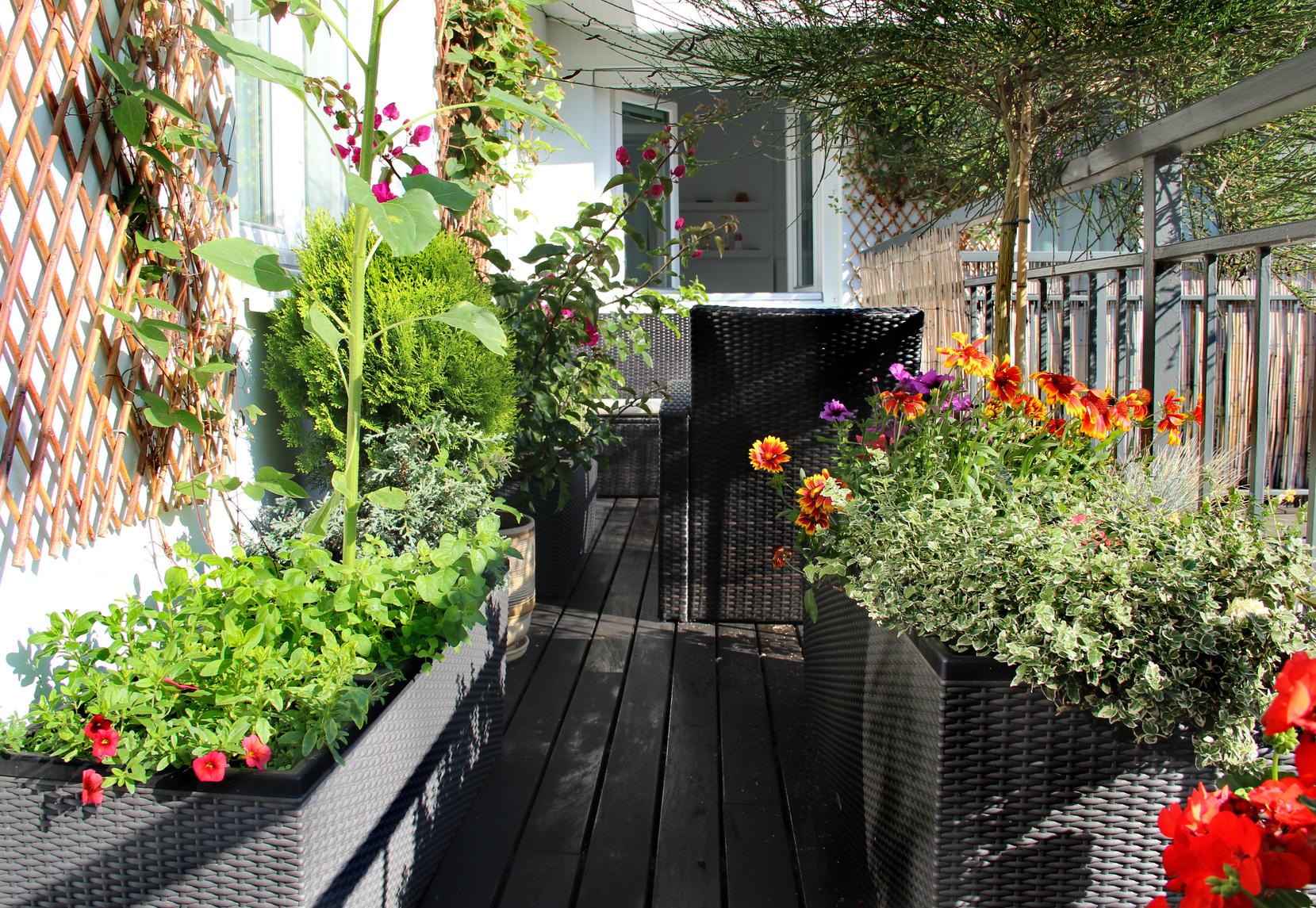 un jardin sur votre balcon. Black Bedroom Furniture Sets. Home Design Ideas