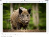 Action de chasse 730 Plaines-Saint-Lange (10)