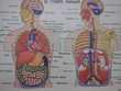 affiches sur corps humain d ' autres Décoration