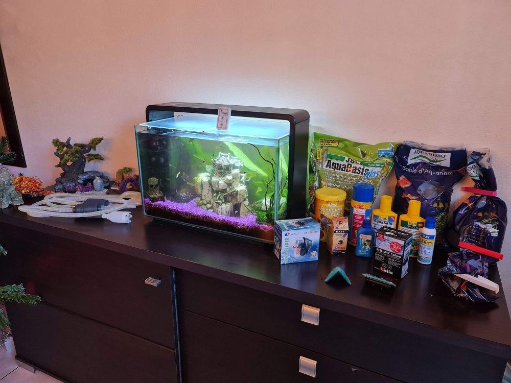 aquarium superfish home 60 litres équipé avec poissons 80 Martignas-sur-Jalle (33)