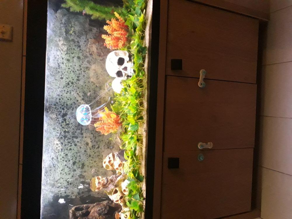 aquarium 380 Tourcoing (59)