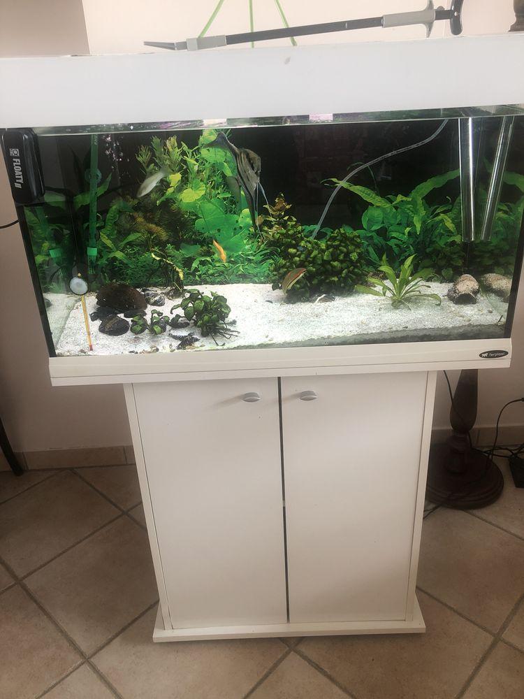 Aquarium 250 Paray-Vieille-Poste (91)