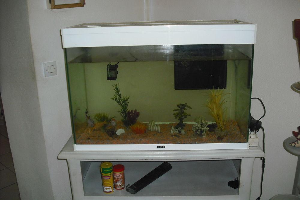 aquarium  100 Apprieu (38)