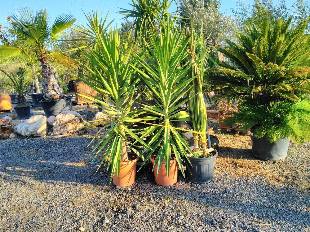 s d'arbres arbustes oliviers cyprès pour votre propriét 2 Gardanne (13)