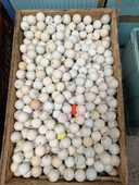 Balle de golf d'occasion 30 Thonon-les-Bains (74)