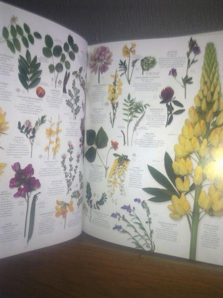 Beau livre neuf histoire naturelle 20 Morteau (25)