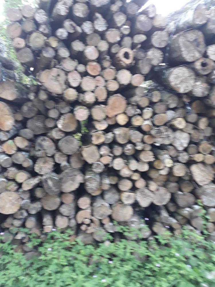 bois de chauffage bien  sec 45 Sens (89)