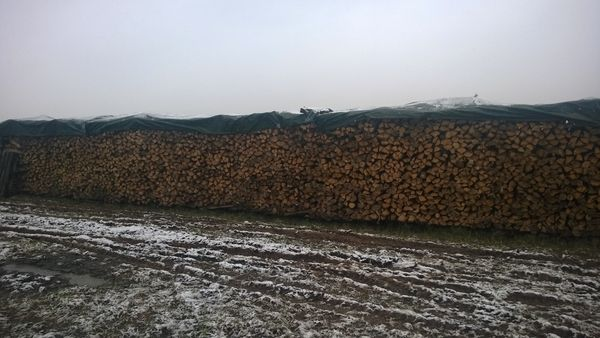 Chene Bois De Chauffage : Achetez bois de chauffage occasion, annonce vente ? Scherwiller (67