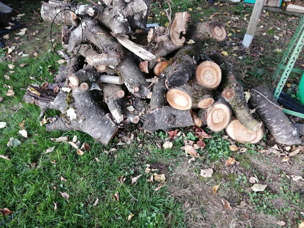 Bois chauffage 25 Martres-de-Rivière (31)
