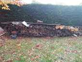 bois sec et coupe 40 Coulogne (62)