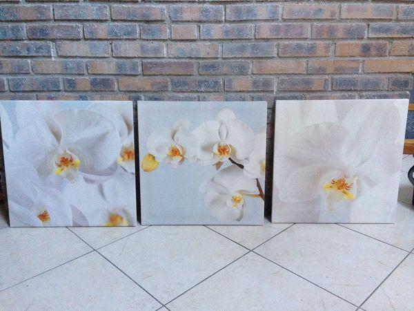 Lot de 3 cadres Orchidées  30 Brunoy (91)