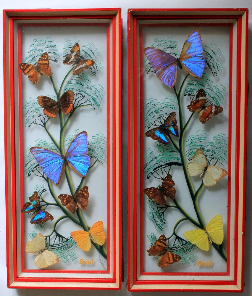 Cadres vitrine Papillons Bresil vintage 60 220 Issy-les-Moulineaux (92)