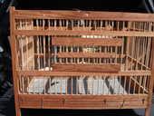 cage oiseaux 0 Soissons (02)