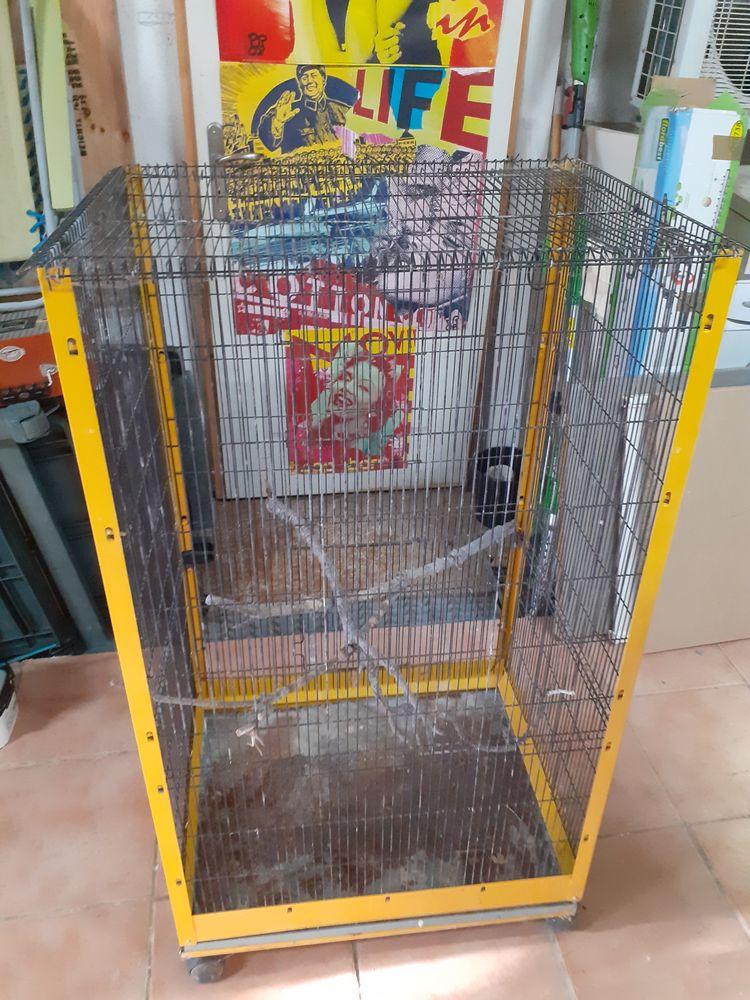 Cage à oiseaux 20 Istres (13)