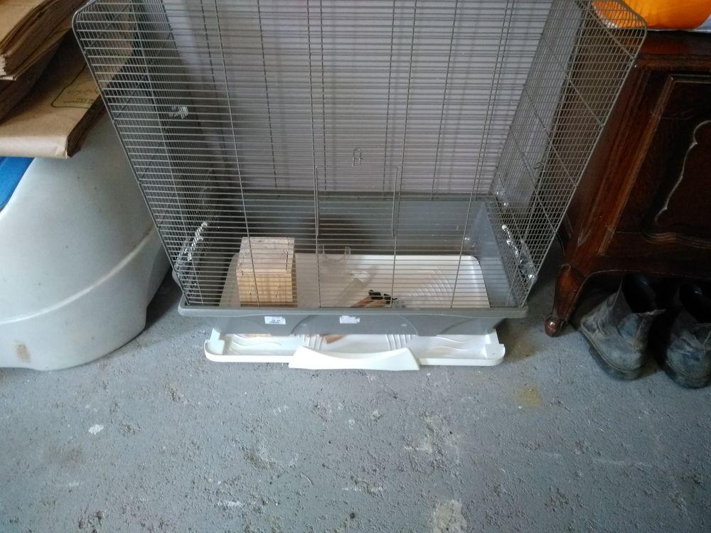 Cage oiseaux 40 Villemur-sur-Tarn (31)