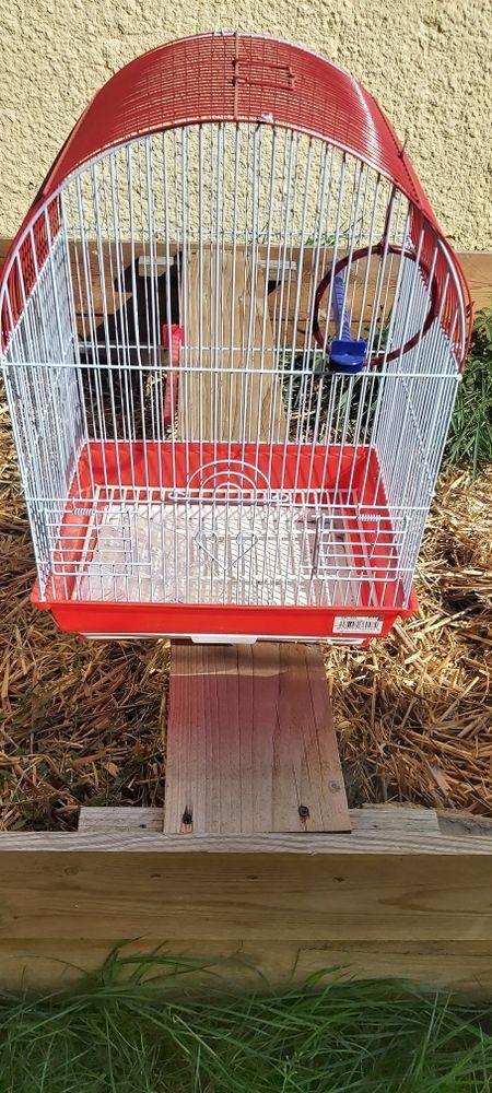 cage  2 oiseaux 30 Tréon (28)