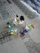 Cane et ses 4 canetons miniature en verres et couleurs