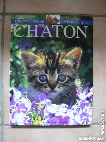 Le chaton 2 Le Beausset (83)