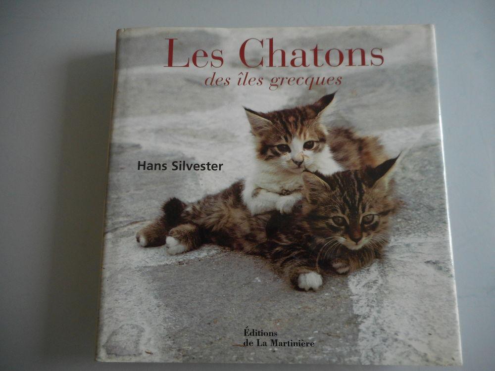 les chatons des iles grecques 8 Limay (78)