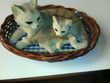 2 chats de collection couche dans leur panier ( N°9)
