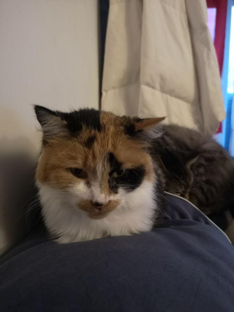 Ma chatte chat Camélia 0 Dammarie-les-Lys (77)