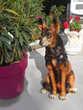 chien décoratif