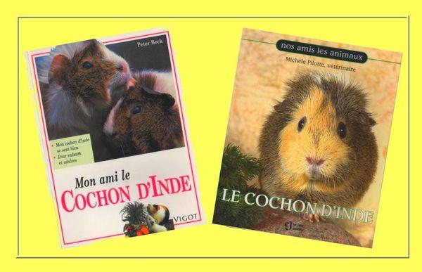 COCHONS D'INDE - 2 GUIDES / prixportcompris 13 Nice (06)