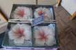 Coffret 4 bougies Mr. CANDLE en forme de fleurs