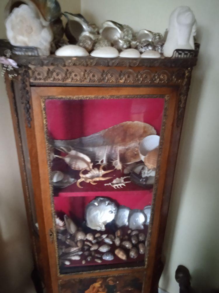 collection de coquillages 200 Saint-James (50)