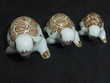 Collection tortue Lot 1