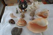 lot de coquillages+corail+rose des sables+fossile 100 Amélie-les-Bains-Palalda (66)