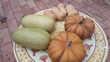 Courges muscade, Buthernuts, mérévilles 0 Pernes-les-Fontaines (84)