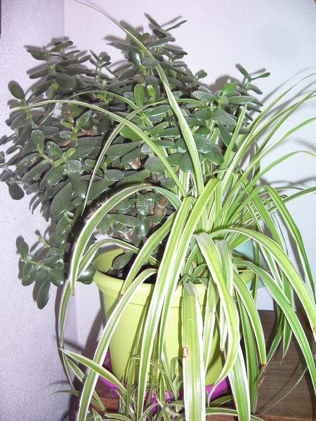 Diverses plantes d'intérieur 10 Conty (80)