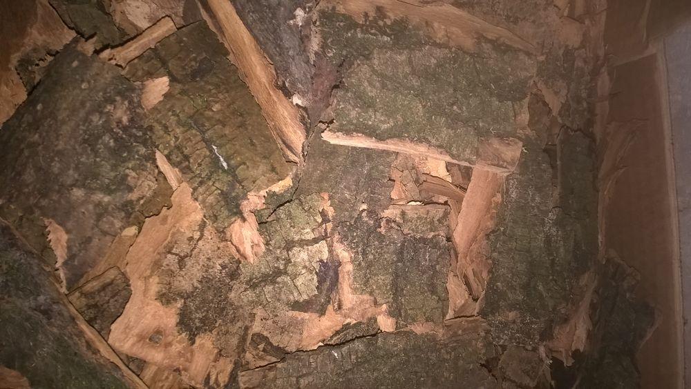 Écorces d' arbres séches diverses. 3 Flers-en-Escrebieux (59)