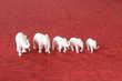 éléphants ivoire