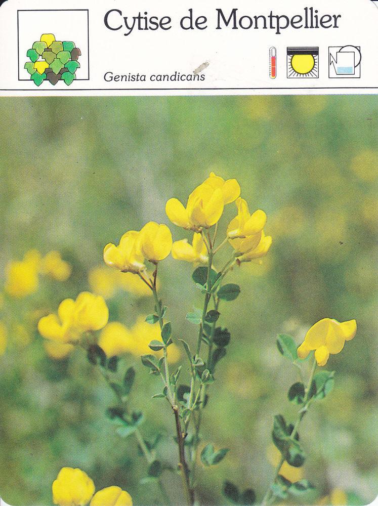 582  Lot n°1/2  De 30 Fiches Monde Végétal  Editions SERVI 0 Lunel (34)