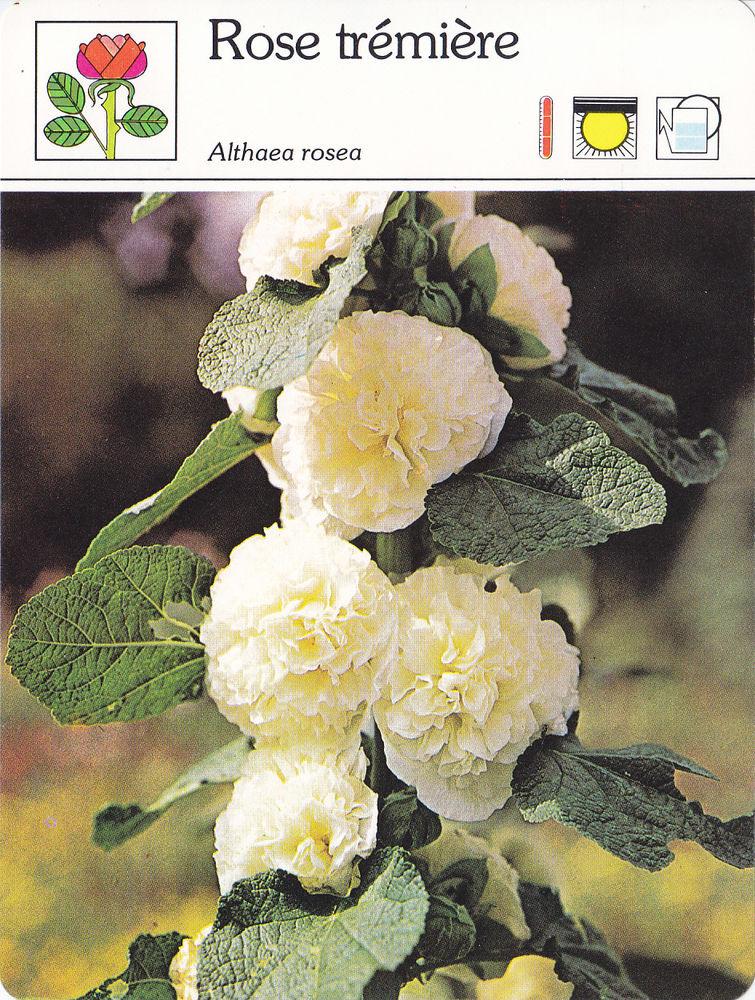 582  Lot n°2/2  De 30 Fiches Monde Végétal  Editions SERVICE 0 Lunel (34)
