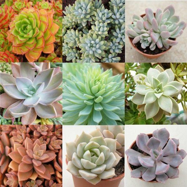 fleurs , plantes , graines, pots 1 Maisons-Alfort (94)