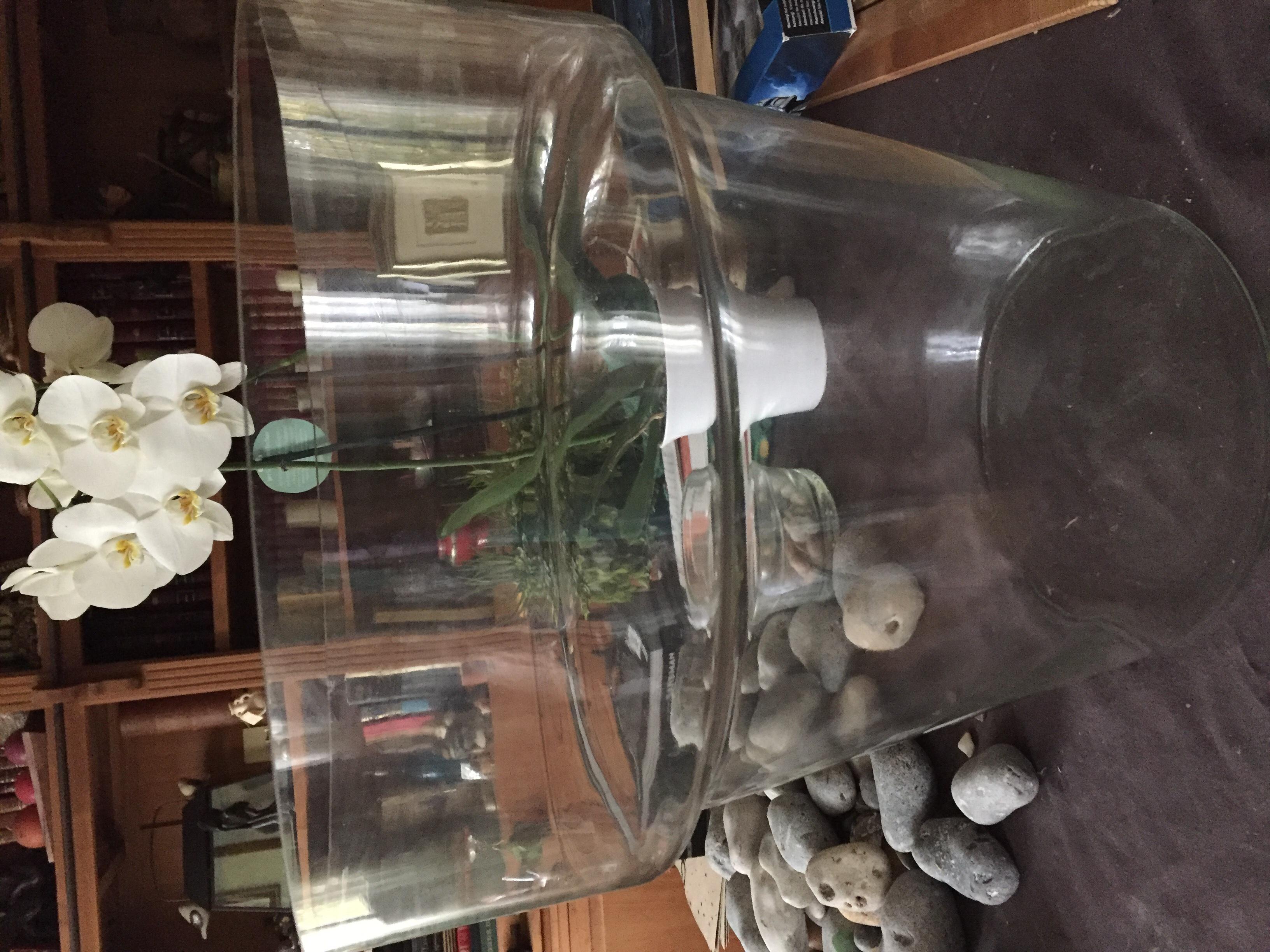 pot fleurs transparent en verre 60 Bagnolet (93)