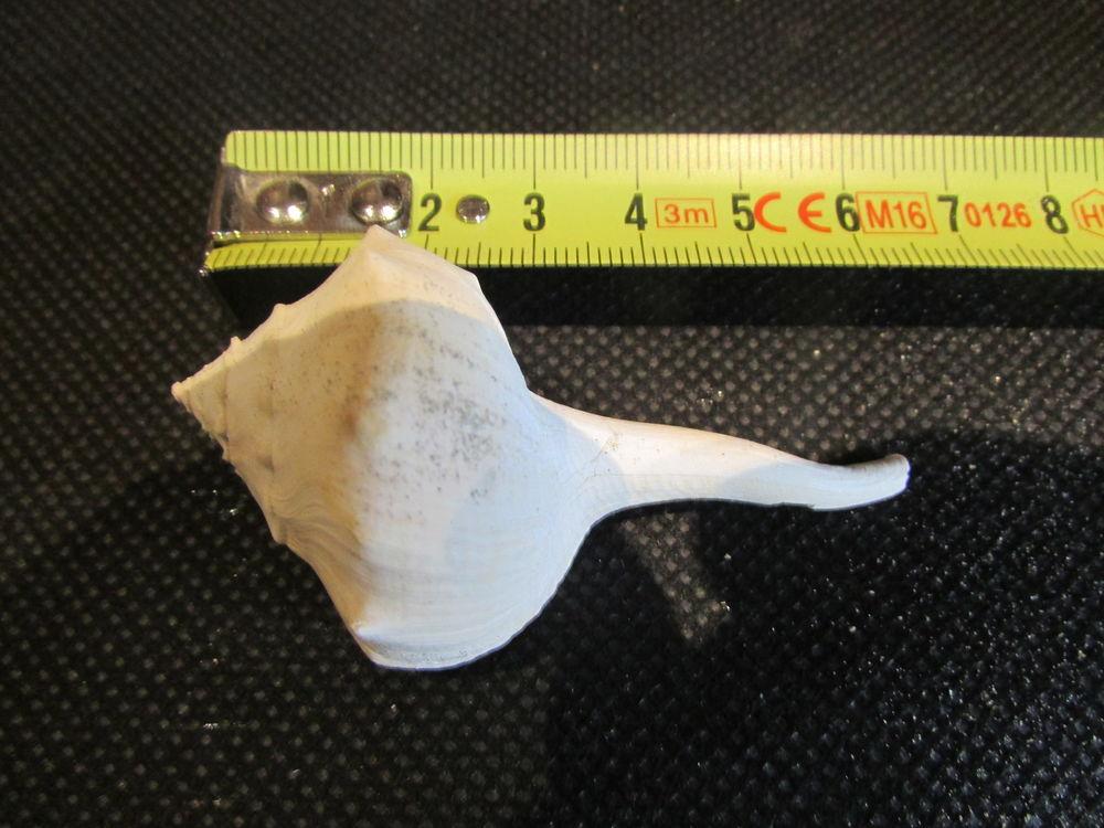 fossile de Bordeaux . 12 Saint-Jean-d'Illac (33)