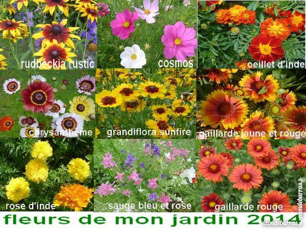 Graines de fleurs 100 à 1000 graines 1 Laventie (62)