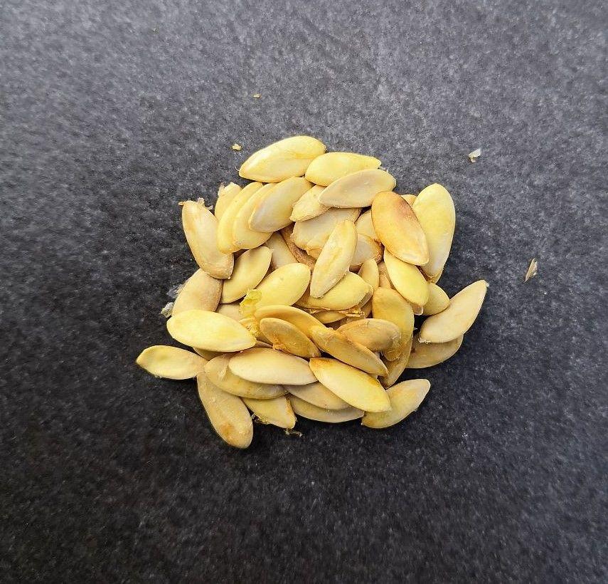Lot de 15 graines de MELON CHARENTAIS BIO 1 La Seyne-sur-Mer (83)