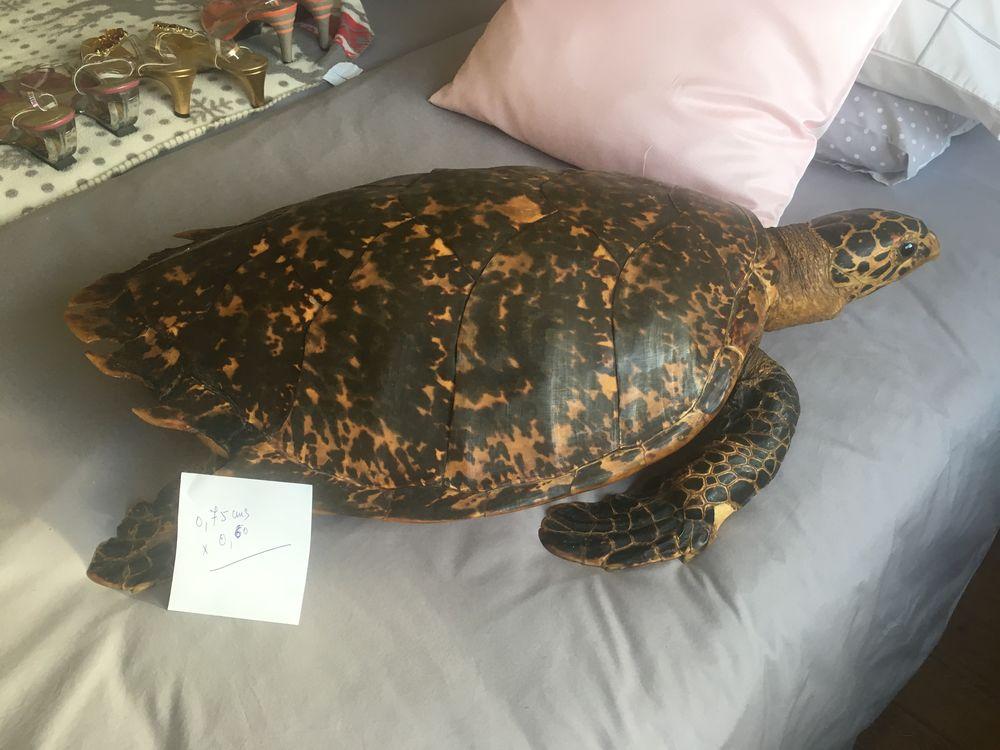 grosse tortue naturalisée 0 Saint-Cloud (92)