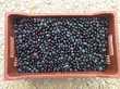 Huile d'olive vierge extra récolté 2018 Cuisine