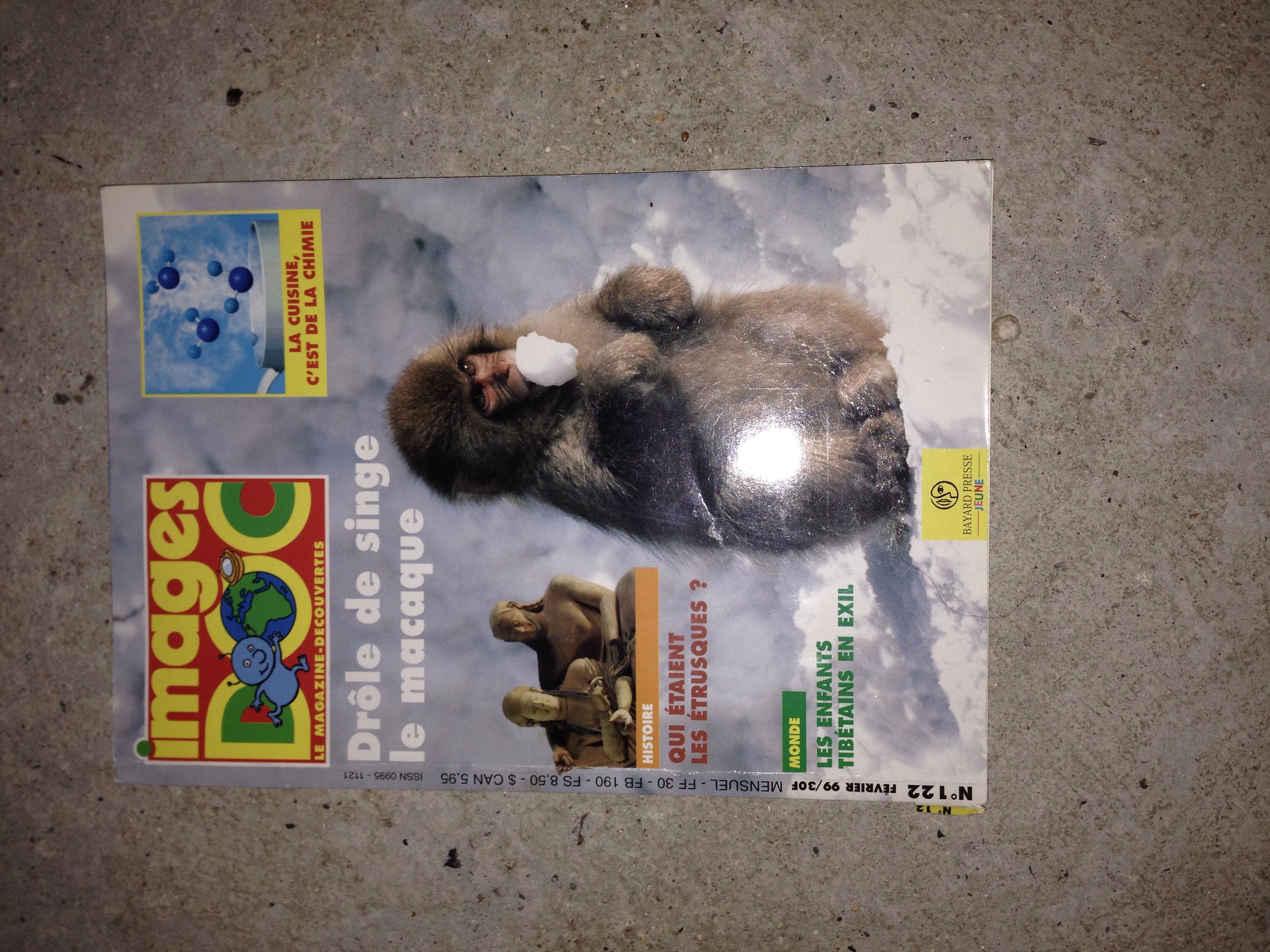 image doc drôle de singe le macaque 1 Valmondois (95)