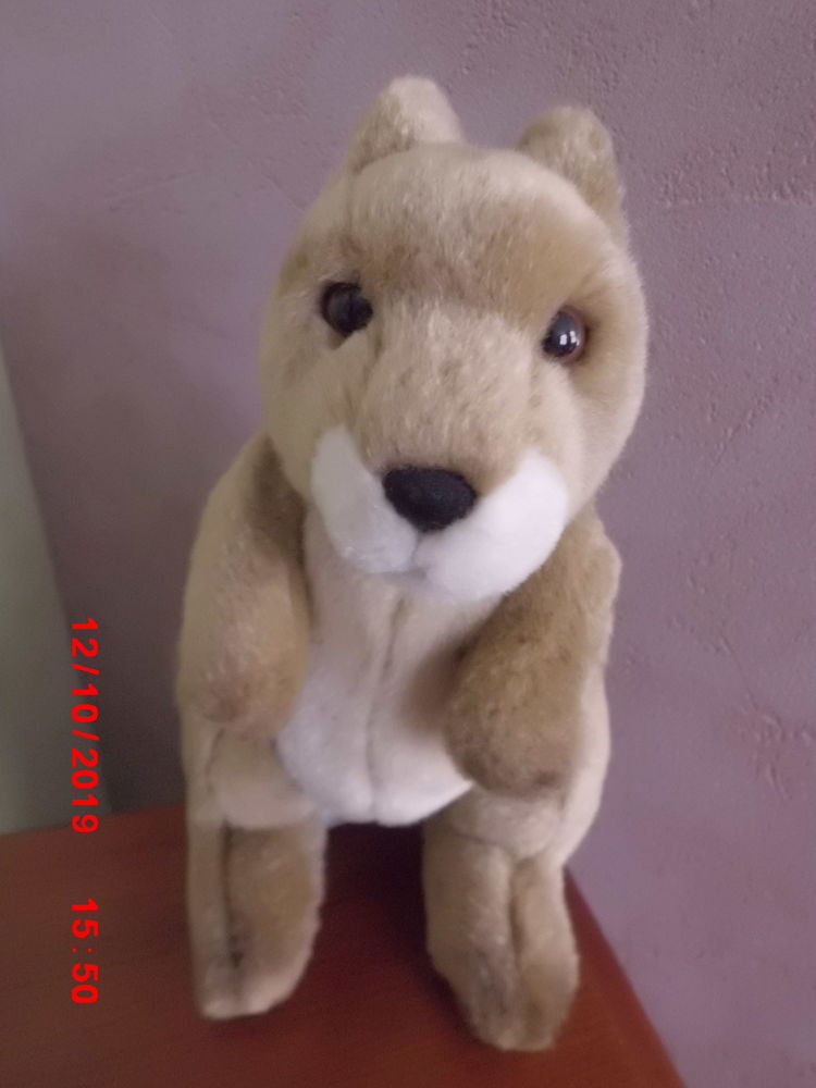 KANGOUROU WWF 11 Oignies (62)