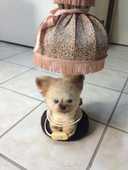 LAMPE DE CHEVET ENFANT 10 Semur-en-Auxois (21)