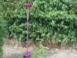 Lampe halogène rose fuchsia Décoration